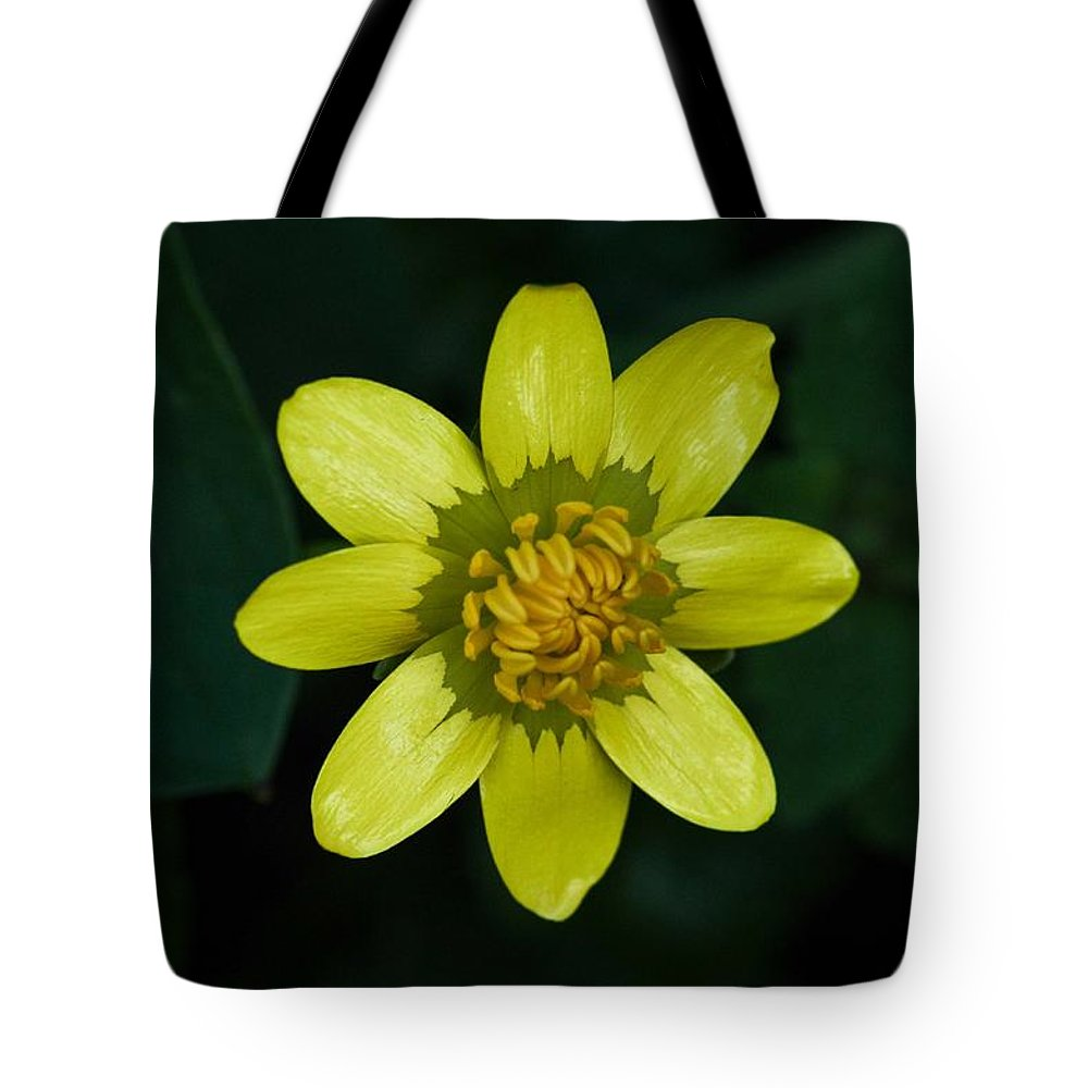 Flowers Tote Bag featuring the photograph Spring Cheer by Teresa Herlinger