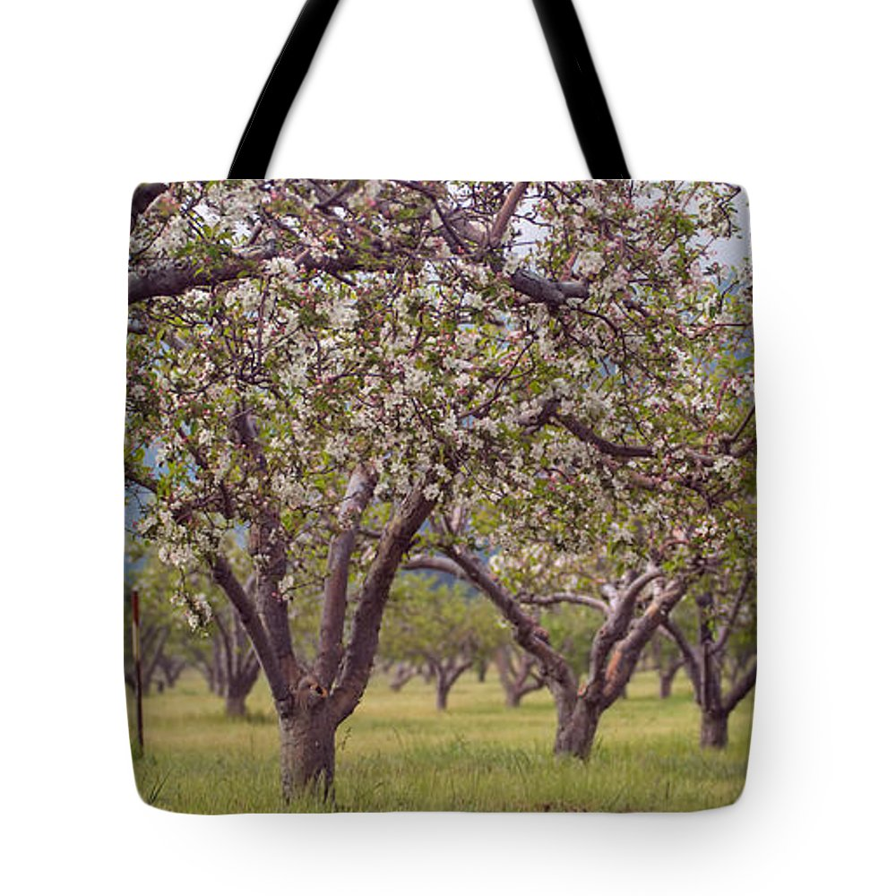 Orchard Tote Bag featuring the photograph Spring Cherry Blossoms by Scott Campbell