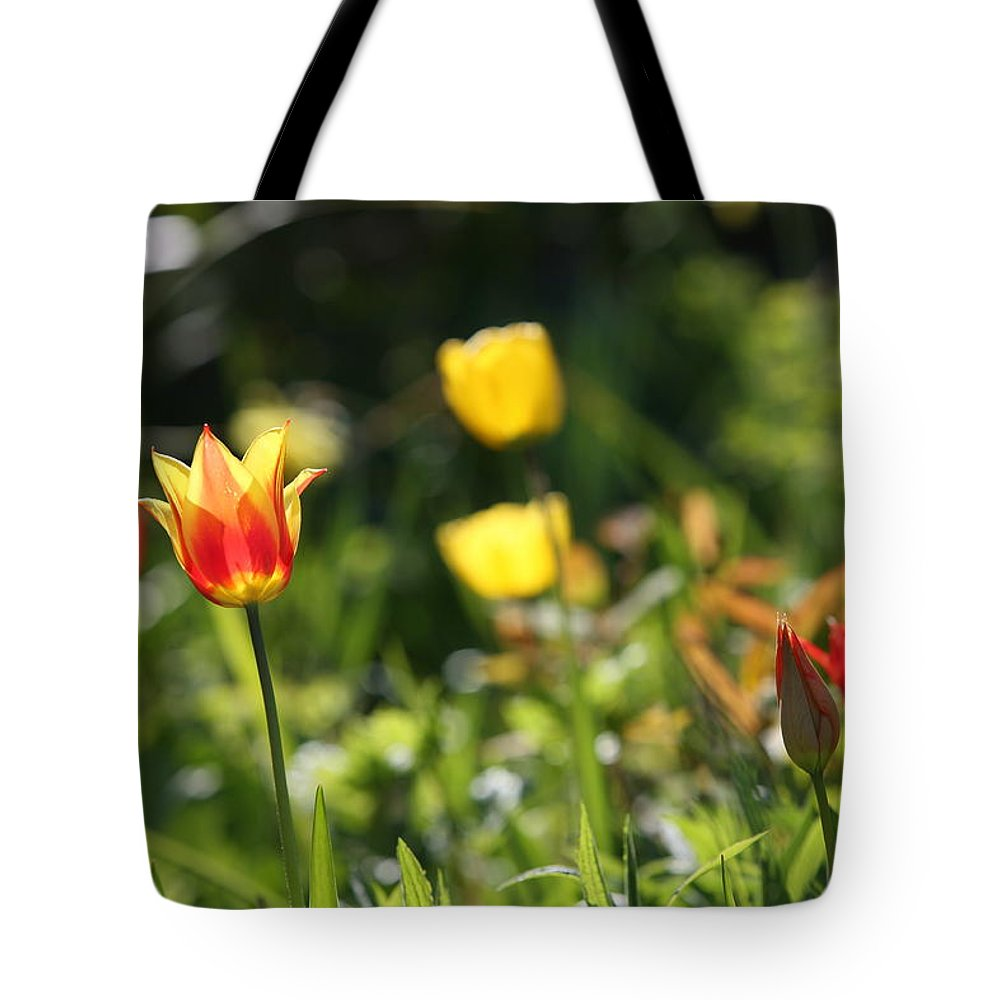 Tulip Tote Bag featuring the photograph Spring Colour by Mark Severn