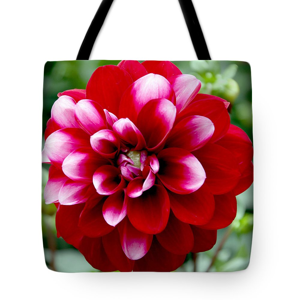 Pink Tote Bag featuring the photograph Red Spring Flower by Bob Slitzan