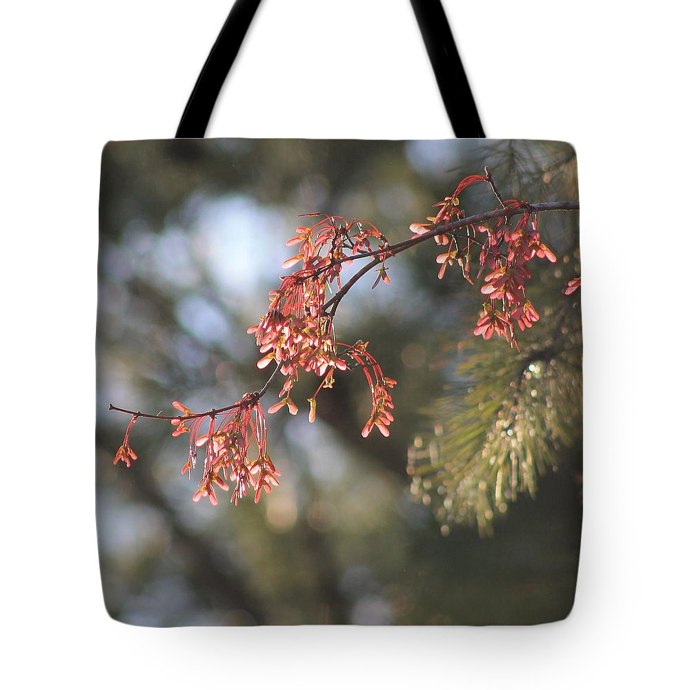 Spring Tote Bag featuring the photograph Spring Growth Bathed In Sunlight by Mary Koval