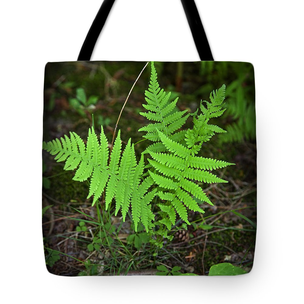 Fern Tote Bag featuring the photograph Spring Has Sprung by John Stephens