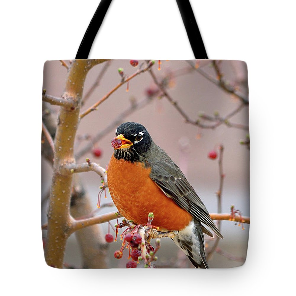 American Robin Tote Bag featuring the photograph Spring Is Coming by Betty LaRue