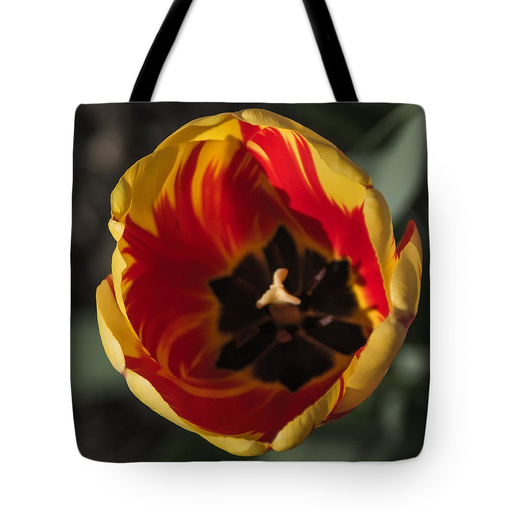Tulip Tote Bag featuring the photograph Spring Is Here by Photographic Arts And Design Studio