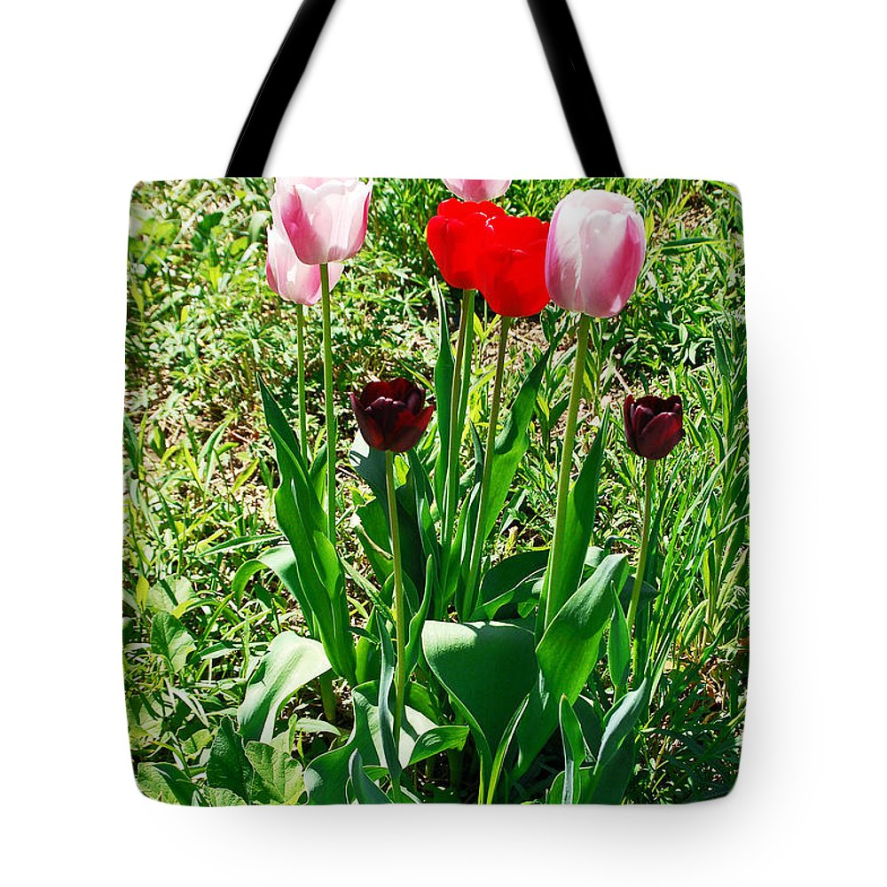 Tulip Tote Bag featuring the photograph Spring Tulips by Aimee L Maher ALM GALLERY