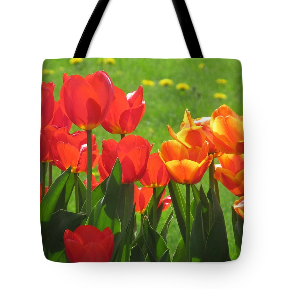 Spring Tote Bag featuring the photograph Spring Tulips by Tina M Wenger