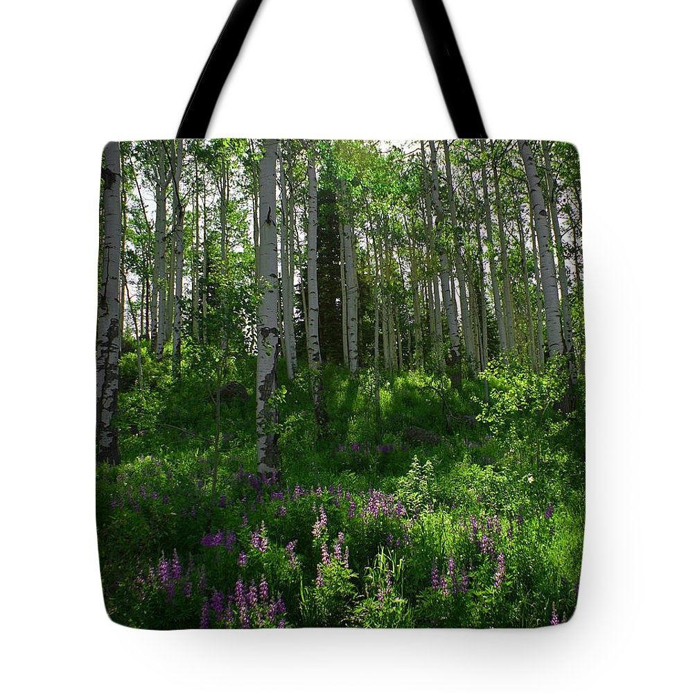 Aspens Tote Bag featuring the photograph Springtime On The Grand Mesa by Ernie Echols