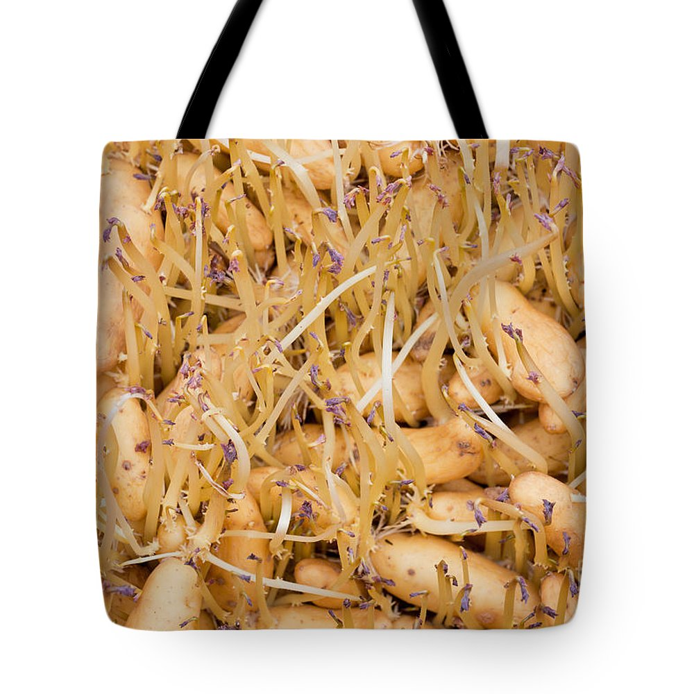 Agricultural Tote Bag featuring the photograph Sprouting Russian Banana Fingerling Seed Potatoes by Stephan Pietzko