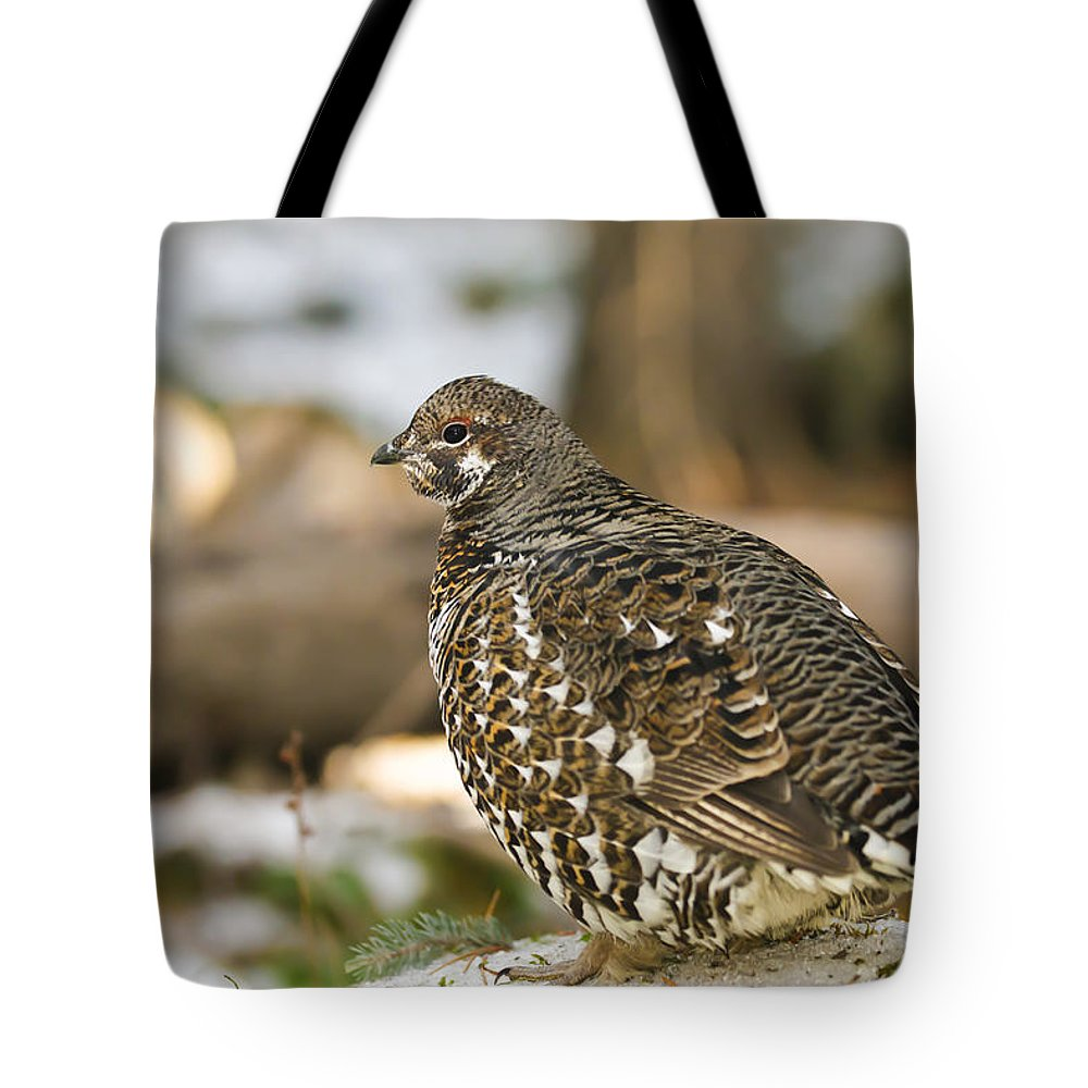 Autumn Tote Bag featuring the photograph Spruce Grouse In The Snow by Brandon Smith