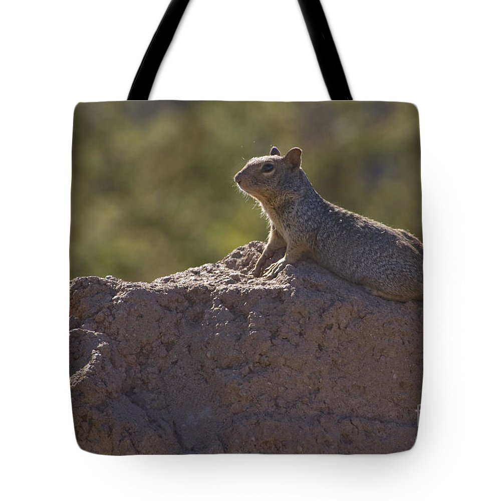 Tamiasciurus Hudsonicus Tote Bag featuring the photograph Squirrel  #8424 by J L Woody Wooden