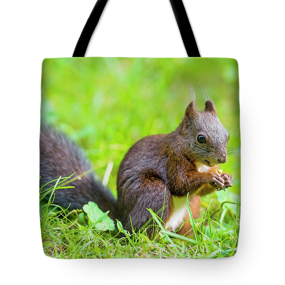 Nut Tote Bag featuring the photograph Squirrel Eating A Nut In The Grass by Picture By Tambako The Jaguar