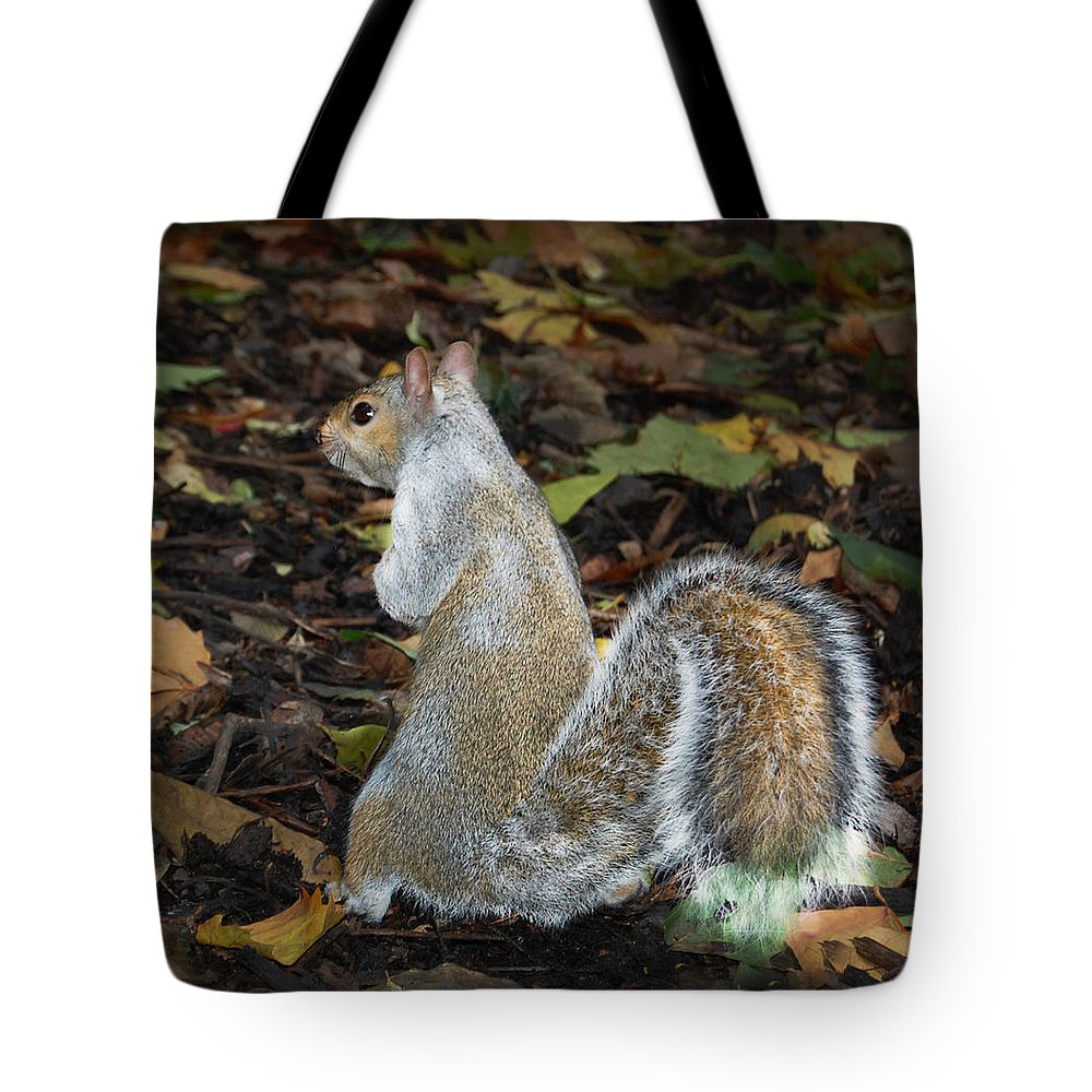 Squirrel Tote Bag featuring the photograph Squirrel by Gina Dsgn