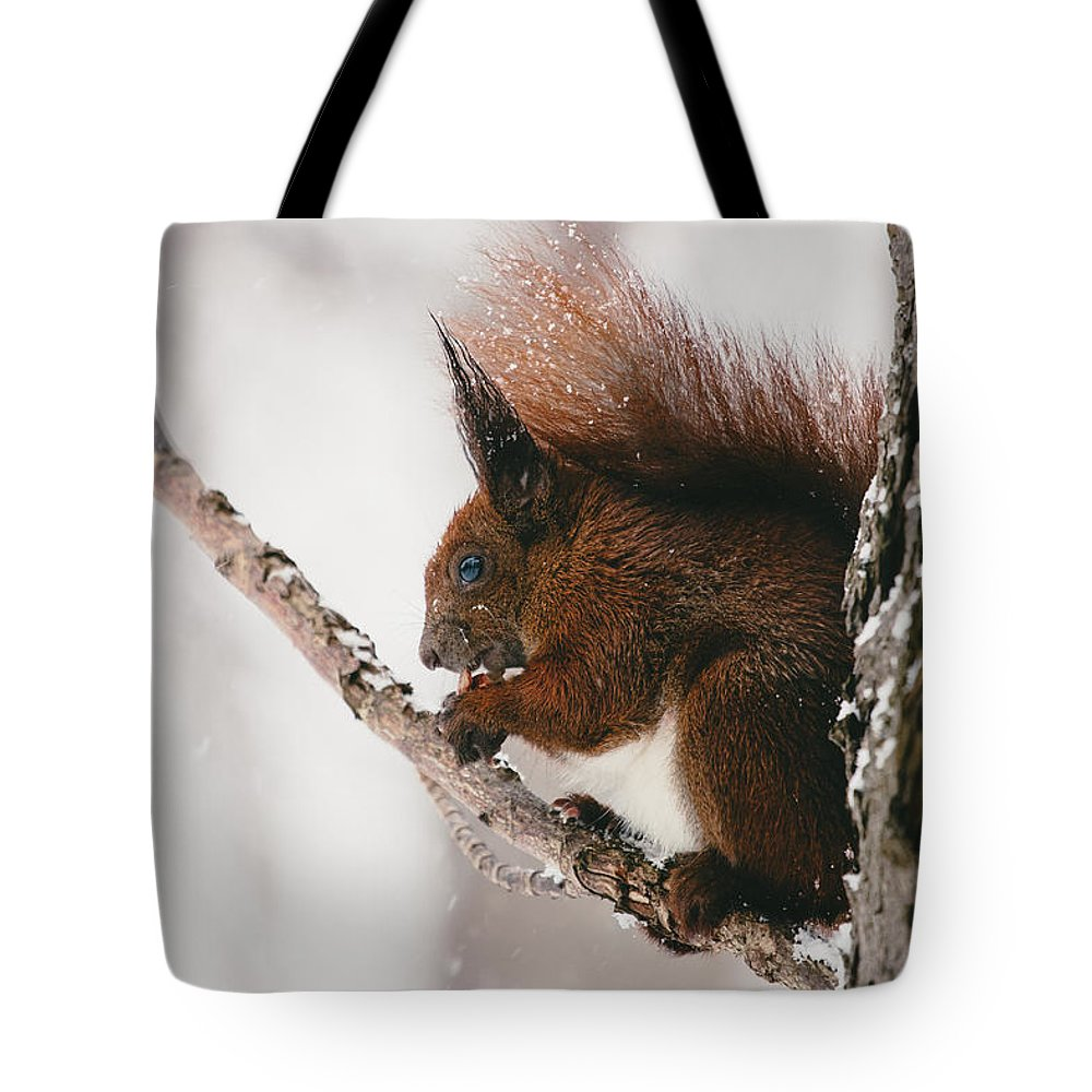Squirrels Tote Bag featuring the photograph Squirrel In Winter by Pati Photography