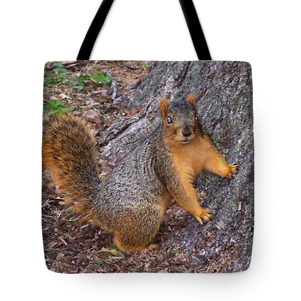 Wildlife Tote Bag featuring the photograph Squirrel by JT Peyton