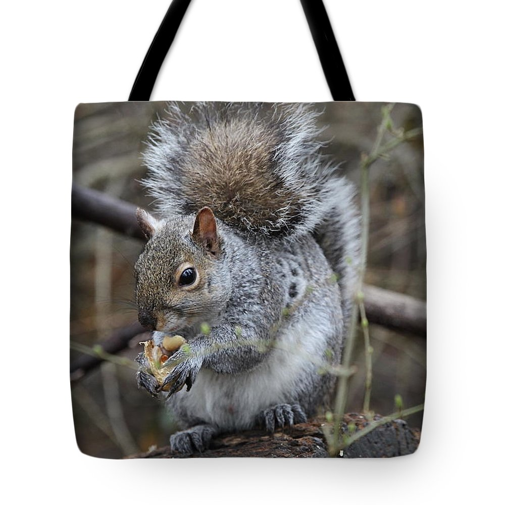 Squirrel Tote Bag featuring the photograph Squirrel by Ken Keener