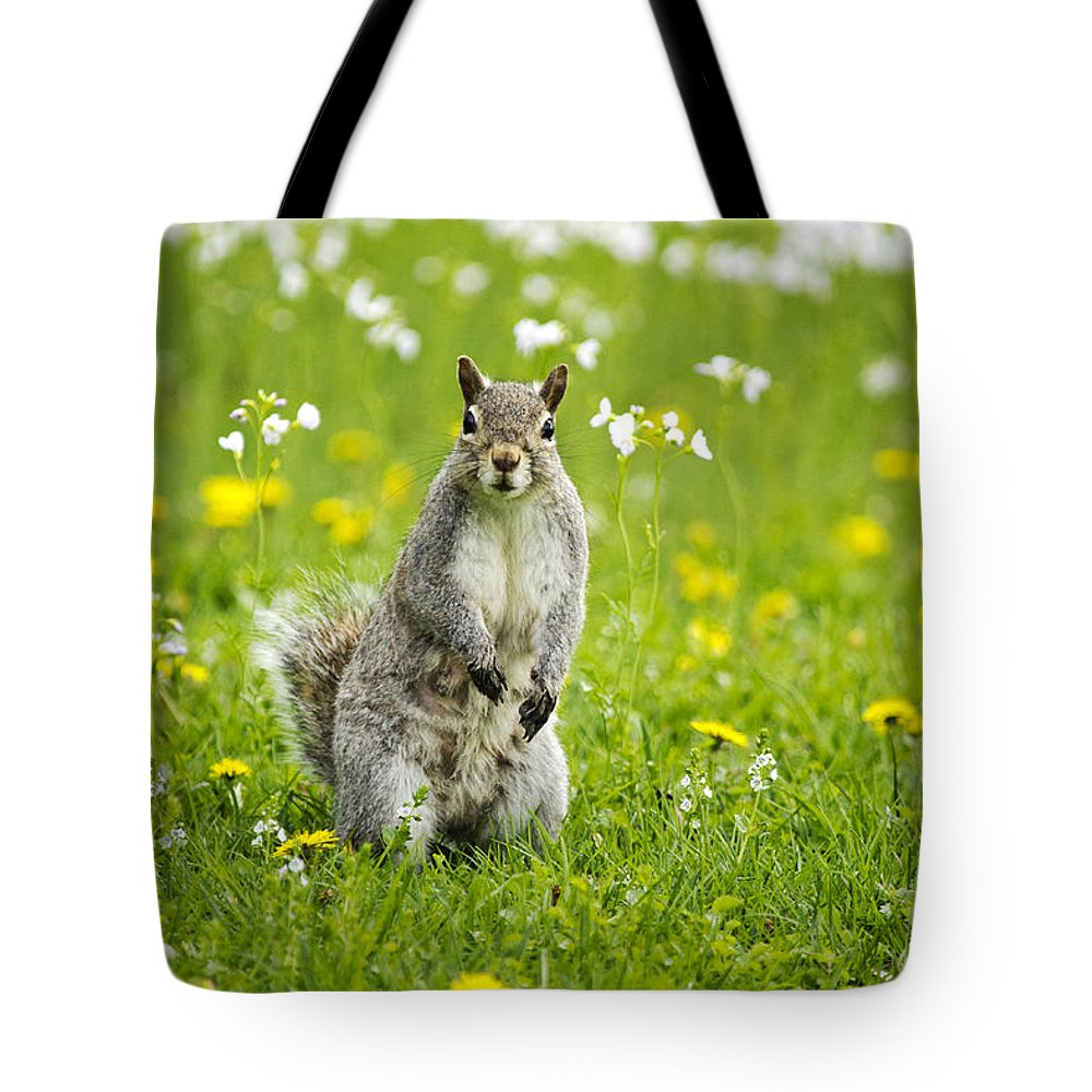 Animal Tote Bag featuring the photograph Squirrel Patrol by Christina Rollo