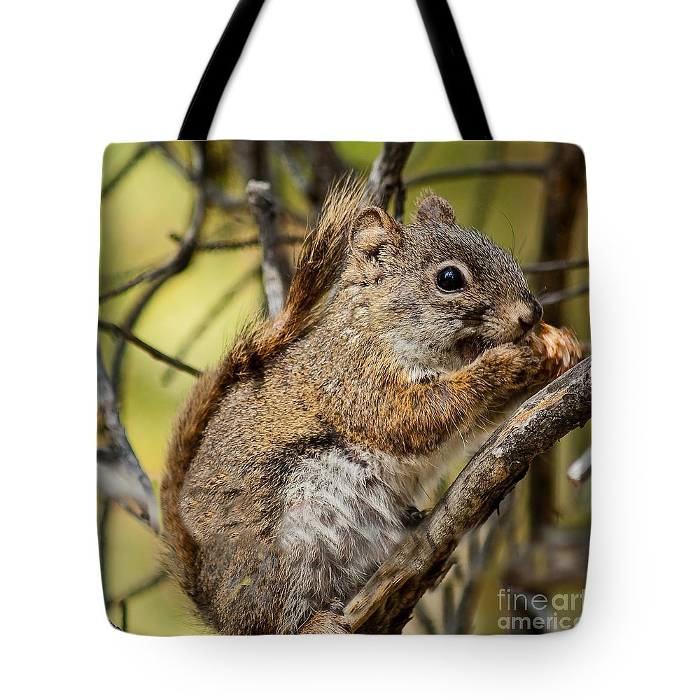 Grand Teton Tote Bag featuring the photograph Squirrel by Robert Bales
