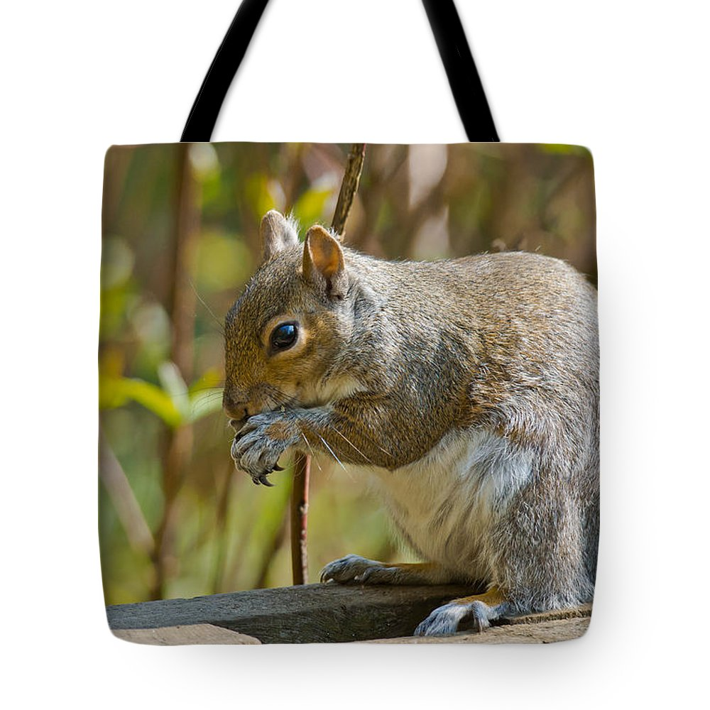 Grey Squirrel Tote Bag featuring the photograph Squirrel by Scott Carruthers