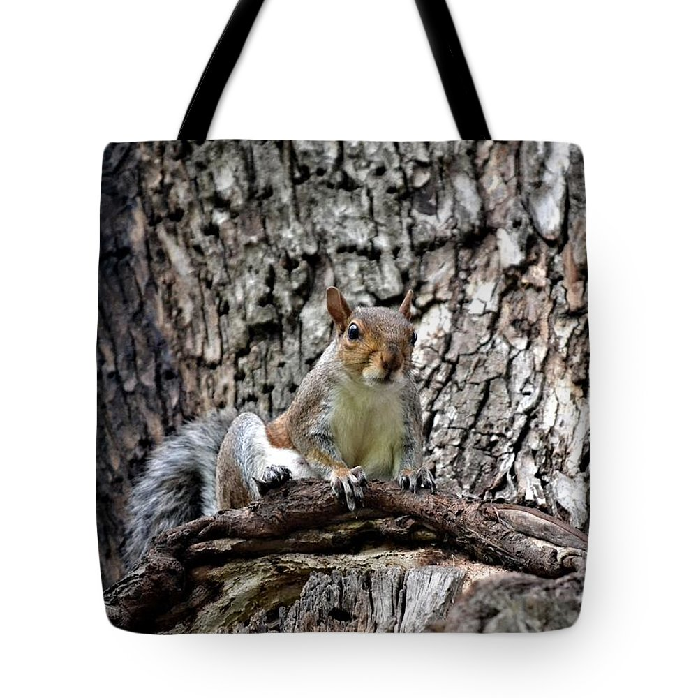 Squirrel Tote Bag featuring the photograph Squirrel by Tara Potts