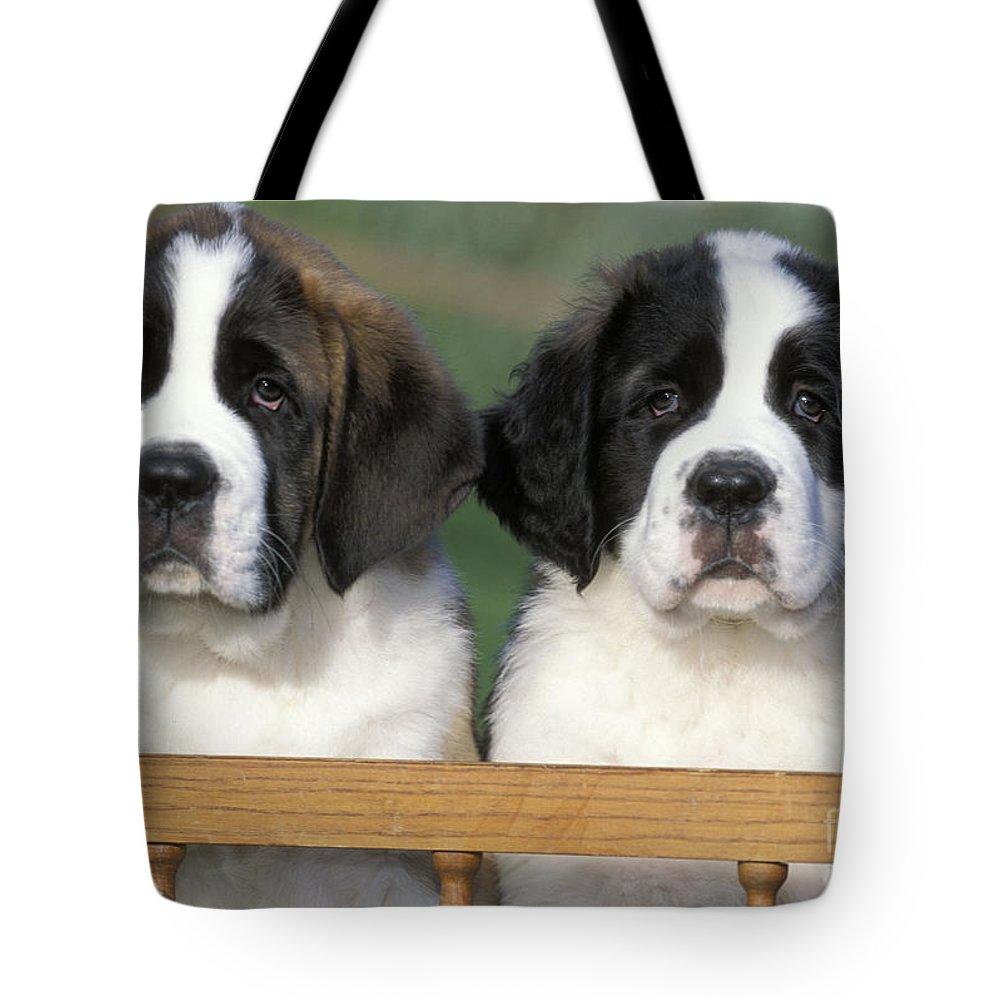St. Bernard Tote Bag featuring the photograph St. Bernard Puppies by Rolf Kopfle