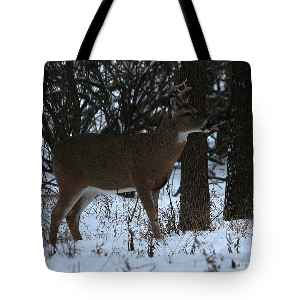 Deer Tote Bag featuring the photograph Stag In The Woods by Lori Tordsen