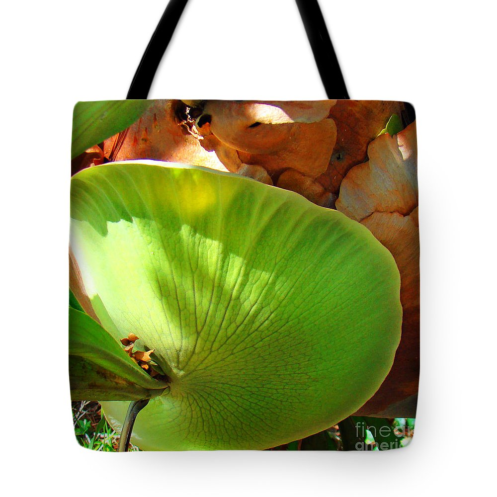 Staghorn Tote Bag featuring the photograph Staghorn Fern Butt by Nancy L Marshall