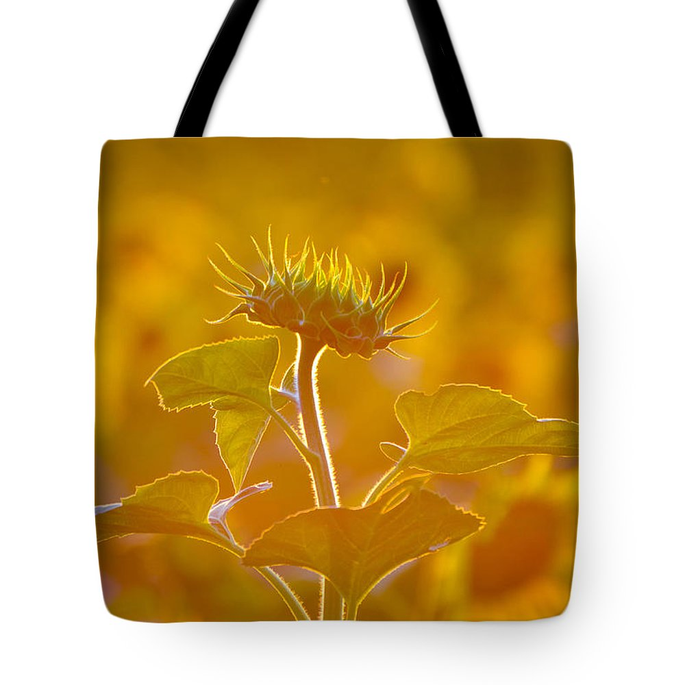 Sunflower Tote Bag featuring the photograph Stand Out by Amy Porter