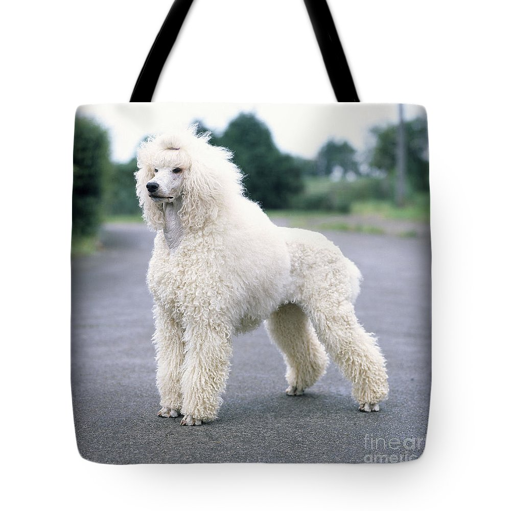 Standard Poodle Tote Bag featuring the photograph Standard Poodle Dog, Unclipped by John Daniels