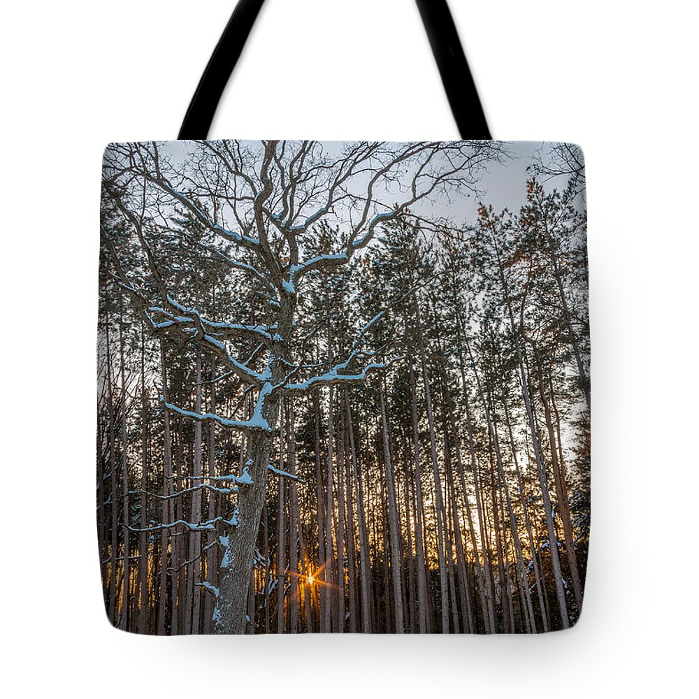 Cold Tote Bag featuring the photograph Standing Among The Many by Andrew Slater