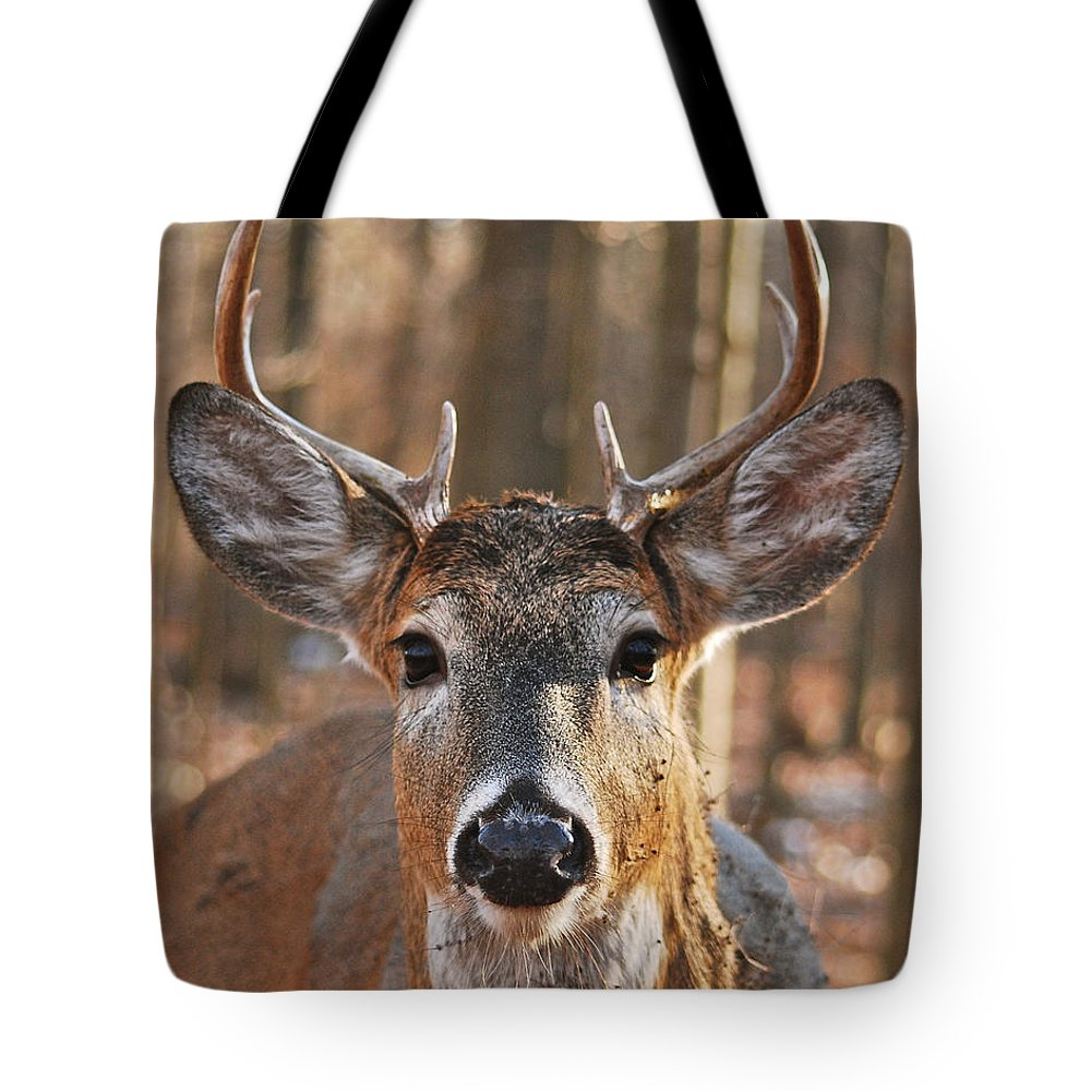 Whitetail Tote Bag featuring the photograph Stare Down With An Eight Point Buck_1112 by Michael Peychich