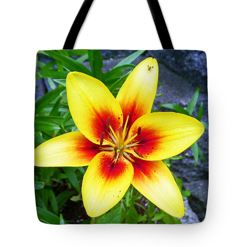 Flower Tote Bag featuring the photograph Stargazer by Aimee L Maher ALM GALLERY