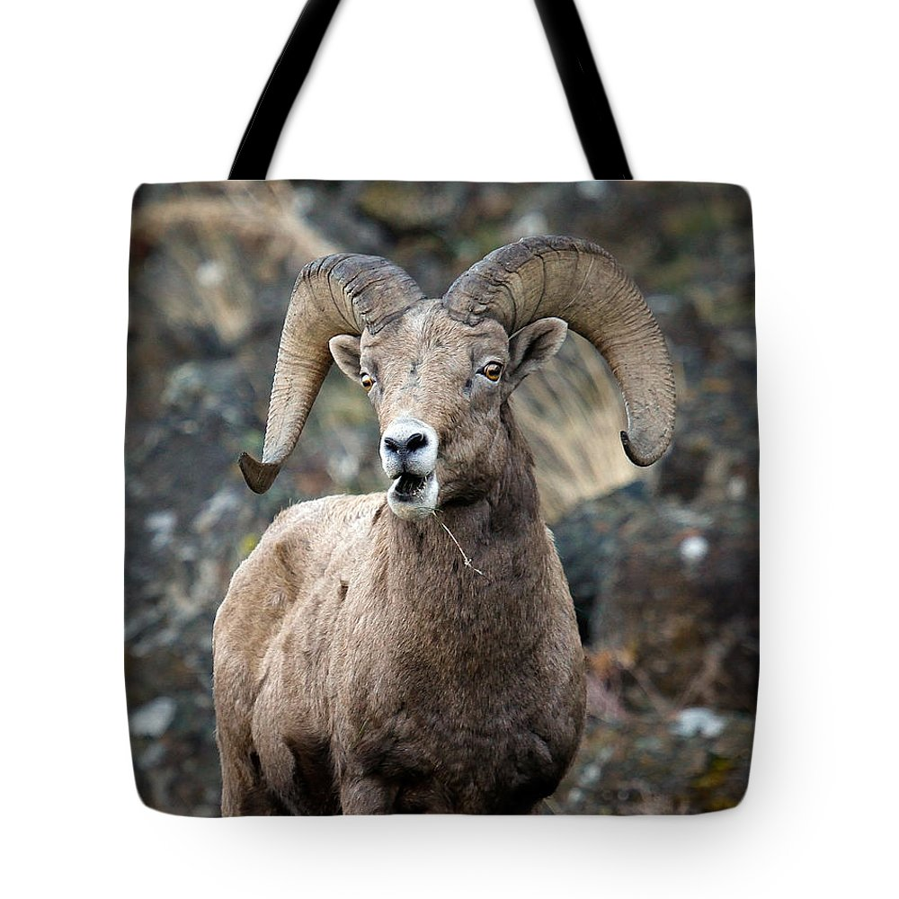Ram Tote Bag featuring the photograph Startled Ram by Steve McKinzie