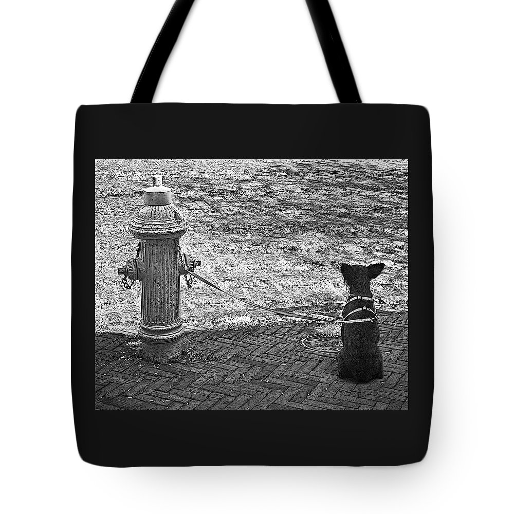 Dog Tote Bag featuring the photograph Stay Or Go by John Cardamone