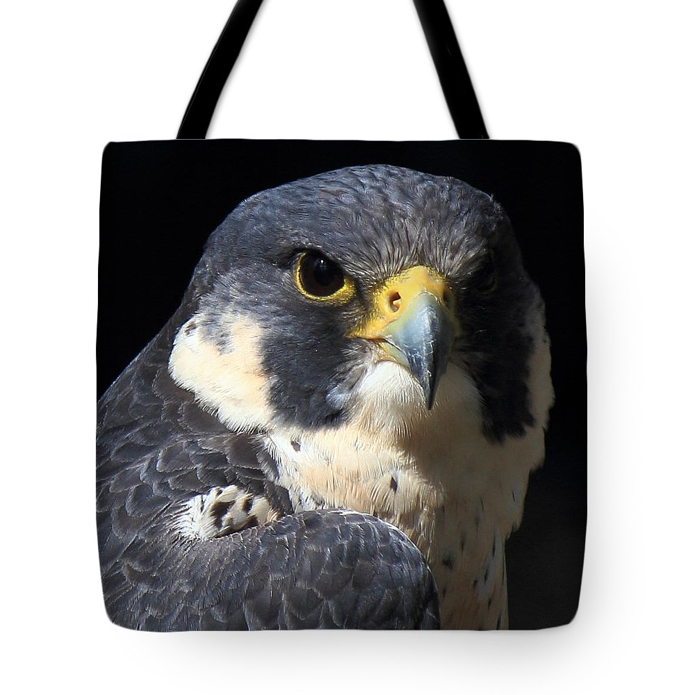 Peregrine Tote Bag featuring the photograph Steely Stare by Randy Hall