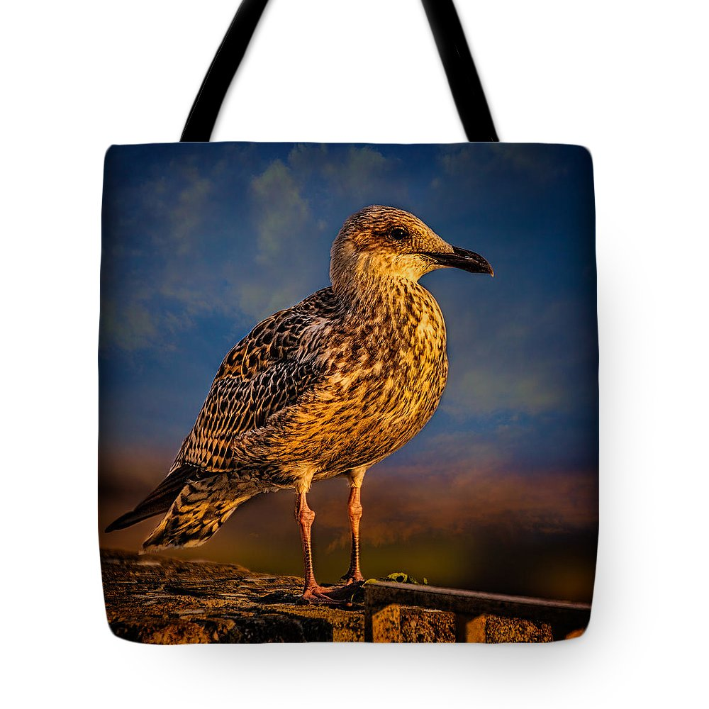 Gull Tote Bag featuring the photograph Steven Seagull by Chris Lord