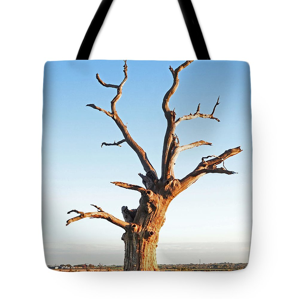 Oak Tree Tote Bag featuring the photograph Still Standing Proud by Gill Billington