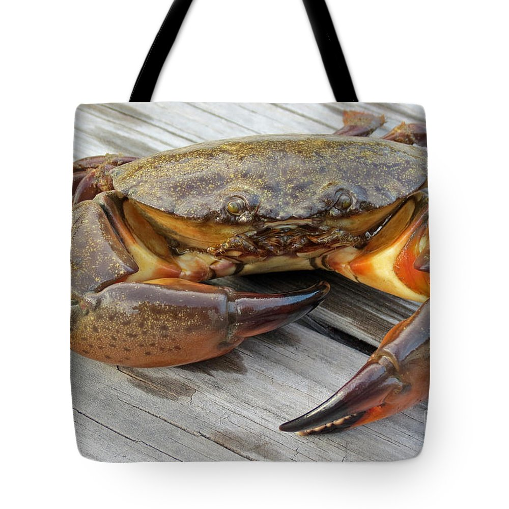 Crissy Anderson Tote Bag featuring the photograph Stone Crab Baby by Crissy Anderson