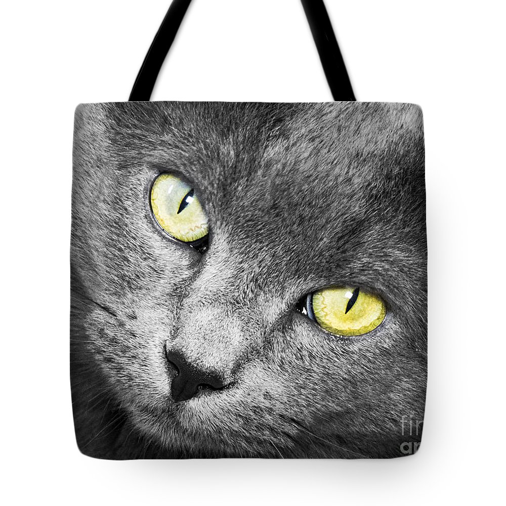 Cat Tote Bag featuring the photograph Stormy by Jon Munson II