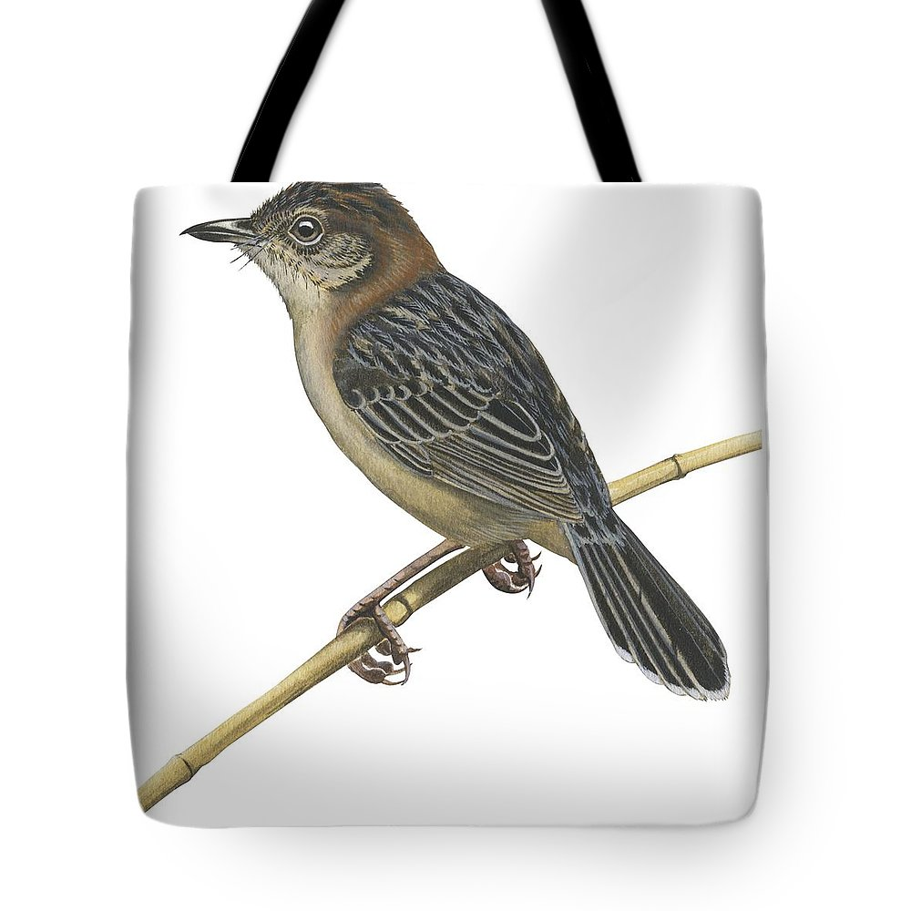 No People; Square Image; Full Length; White Background; One Animal; Wildlife; Close Up; Illustration And Painting; Bird; Perching; Branch; Beak; Wing; Feather; Tail; Zoology; Stout Cisticola; Cisticola Robusta Tote Bag featuring the drawing Stout Cisticola by Anonymous
