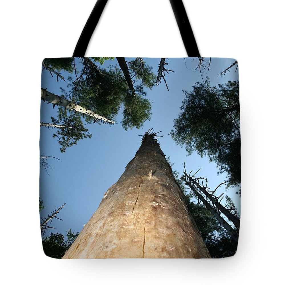 Tree Tote Bag featuring the photograph Straight And Narrow by Neal Eslinger