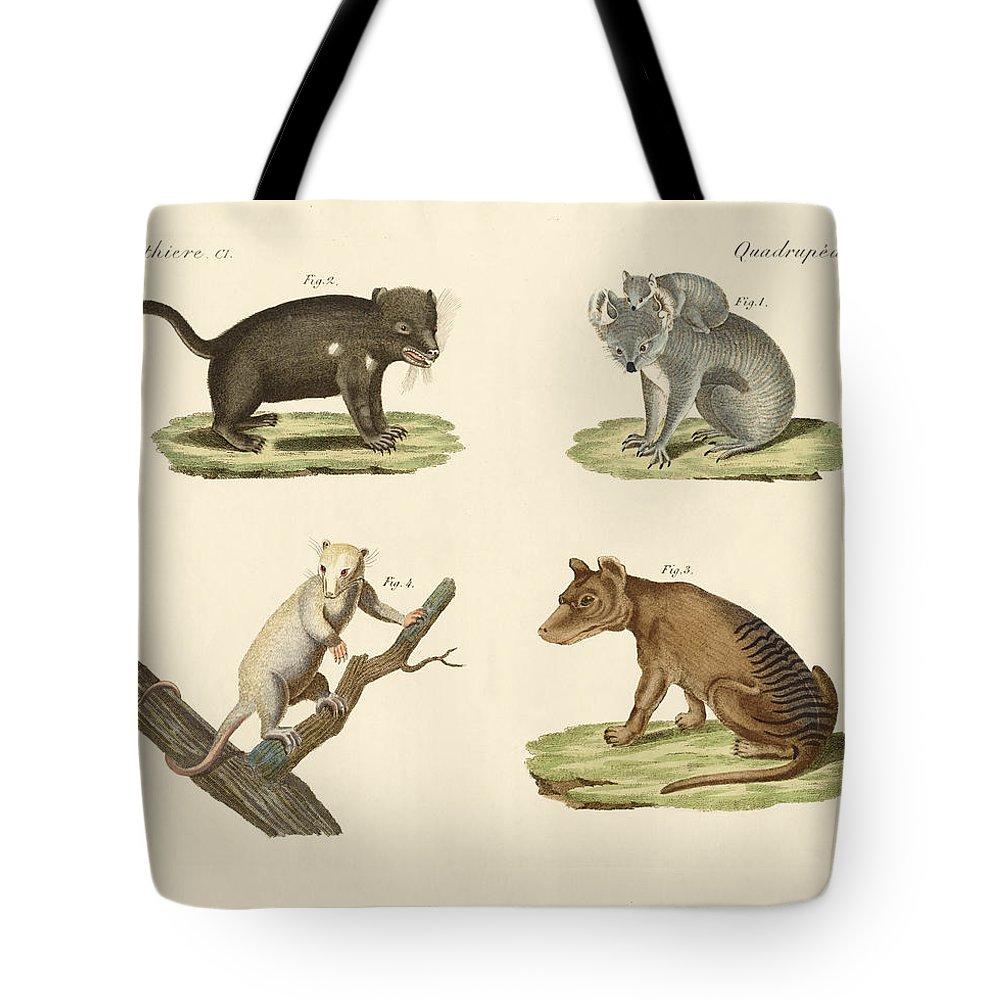 Bertuch Tote Bag featuring the drawing Strange Marsupials by Splendid Art Prints
