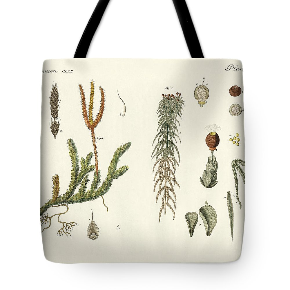 Bertuch Tote Bag featuring the drawing Strange Mosses by Splendid Art Prints