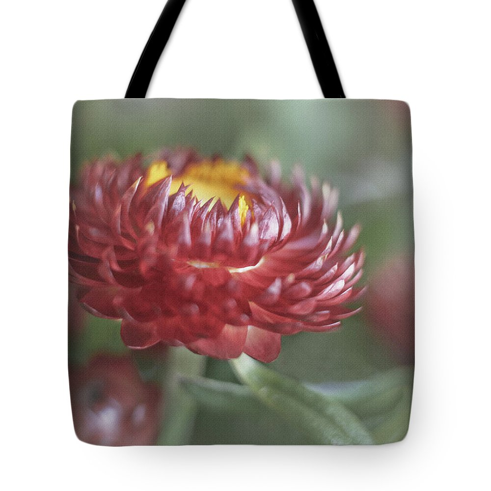 Bloom Tote Bag featuring the photograph Strawflower by David and Carol Kelly