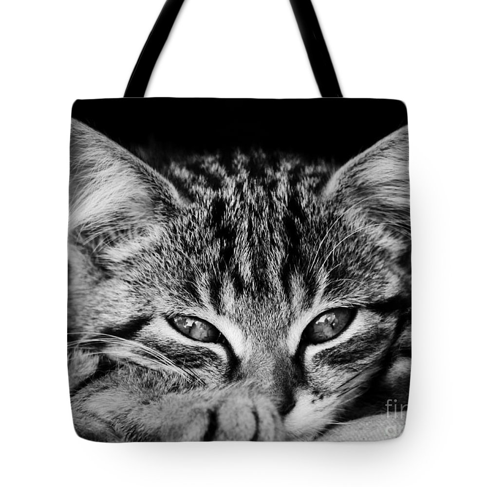 Kitten Tote Bag featuring the photograph Stray Kitten by Brothers Beerens
