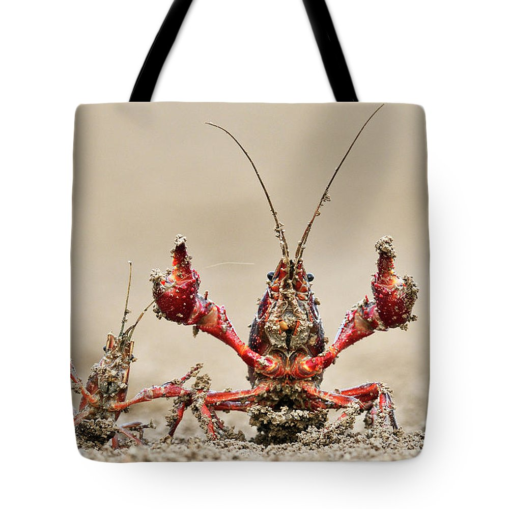Mp Tote Bag featuring the photograph Striped Crayfish by Jasper Doest