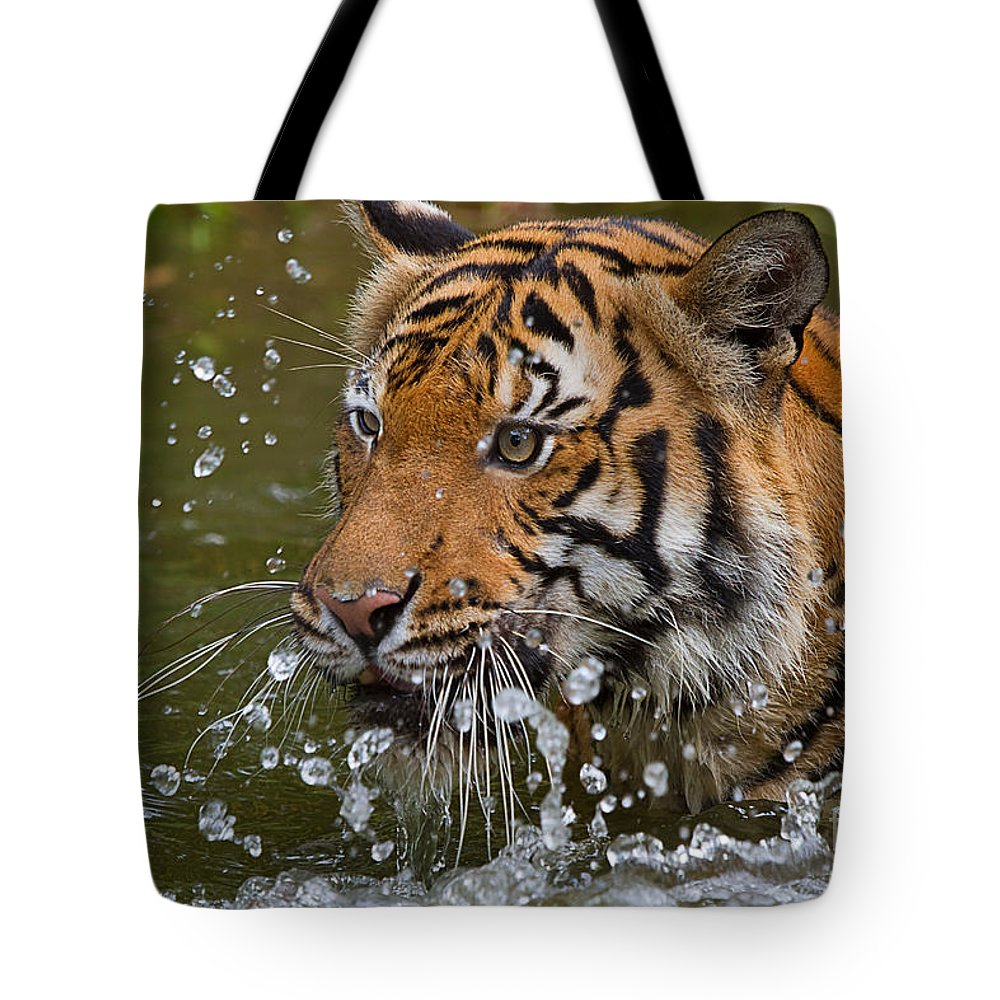 Nature Tote Bag featuring the photograph Sumatran Tiger Splashing In The Water by Louise Heusinkveld