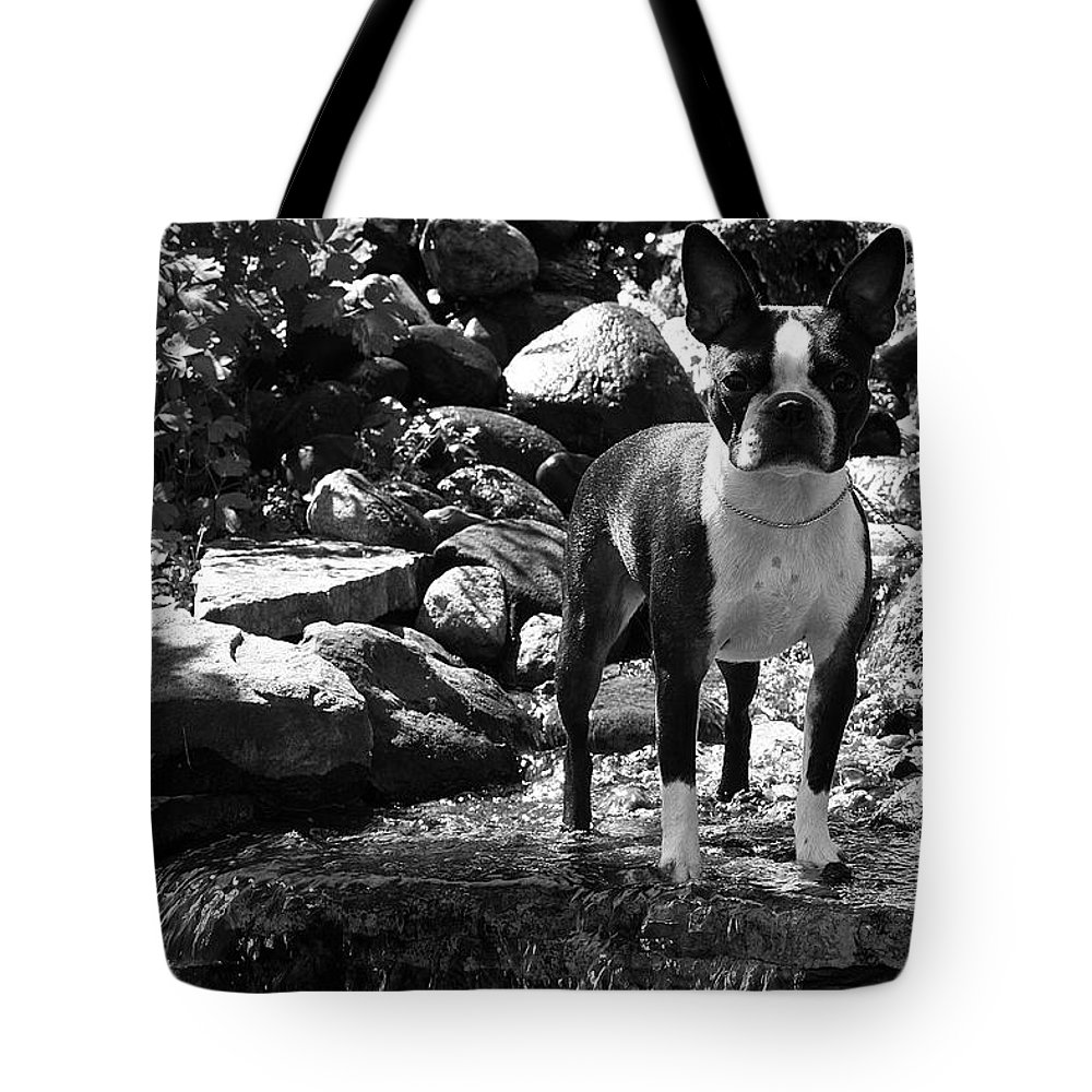 Dog Tote Bag featuring the photograph Summer Jewels by Susan Herber