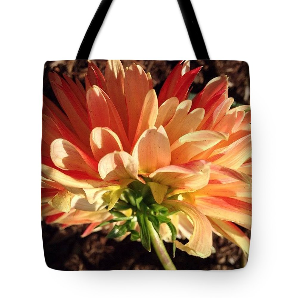 Summer Warmth Orange Dahlia Tote Bag featuring the photograph Summer Warmth Orange Dahlia by Anna Porter