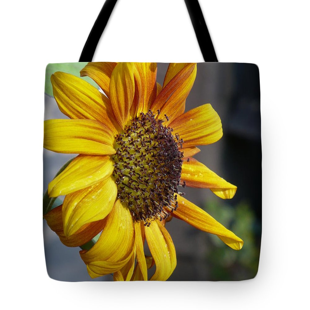 Sun Flower Tote Bag featuring the photograph Sun Flower by Nicki Bennett