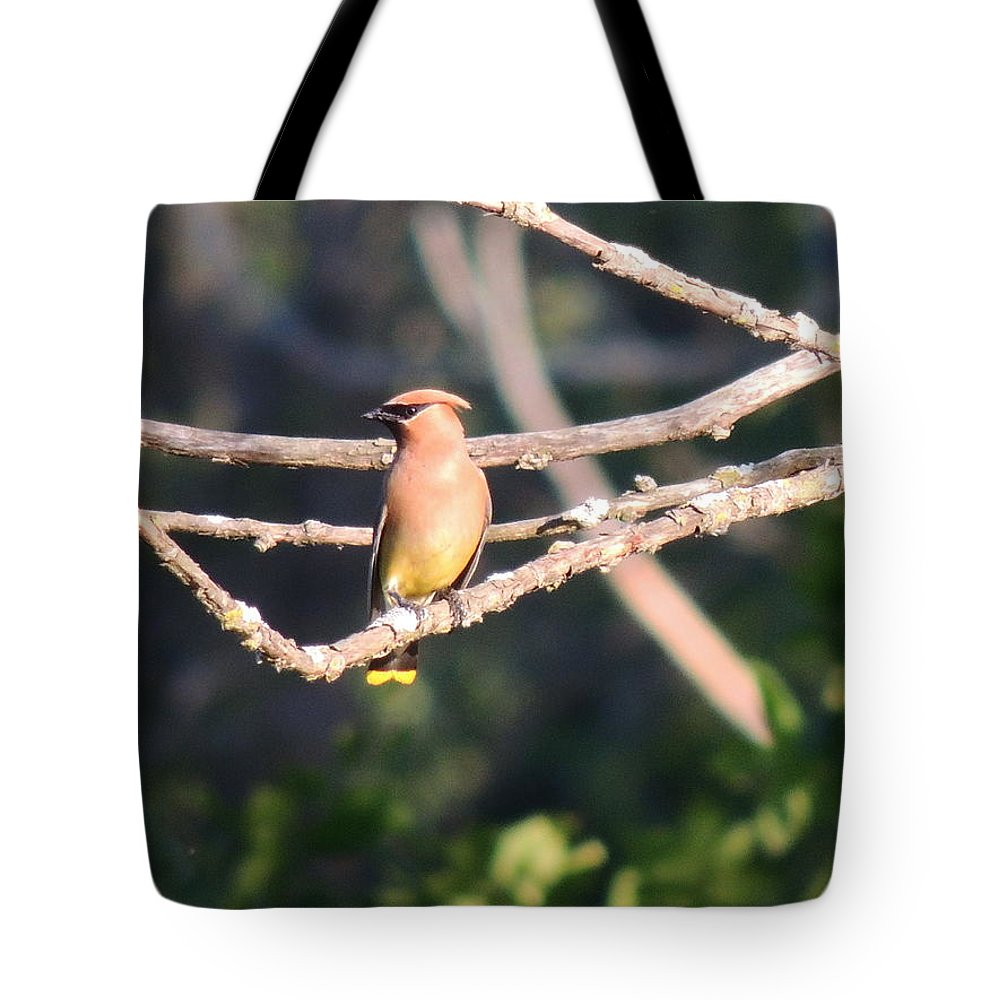 Sunbathing Tote Bag featuring the photograph Sunbathing Cedar Waxwing by Red Cross